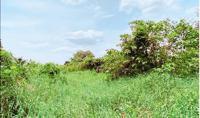 ที่ดินว่างเปล่าหลุดจำนอง ธ.ธนาคารกสิกรไทย เมืองเก่า เมืองขอนแก่น ขอนแก่น